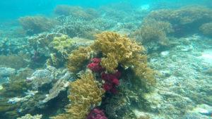Coral Reefs around Pulau Tujuh