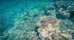 Corals nearby Menjarite Island
