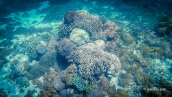 Corals in Pink Beach